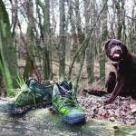 Dog discovery I went through protected area Šur, located next to Bratislava, with my dog Duffy. Dog found old shoe, which was overgrown with moss.