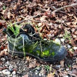 Magic Shoe This photo was fotena in protected areas Šur.There is old shoe overgrown with moss in the forest.